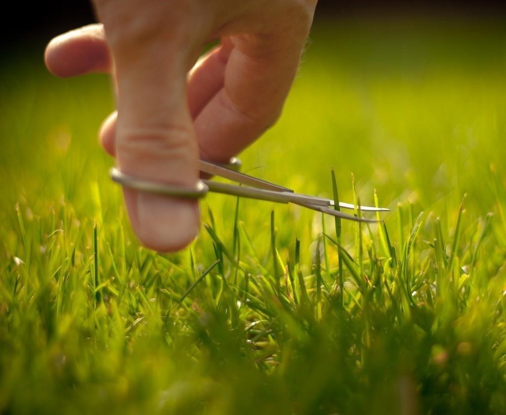 Как восстановить газон выжженный солнцем