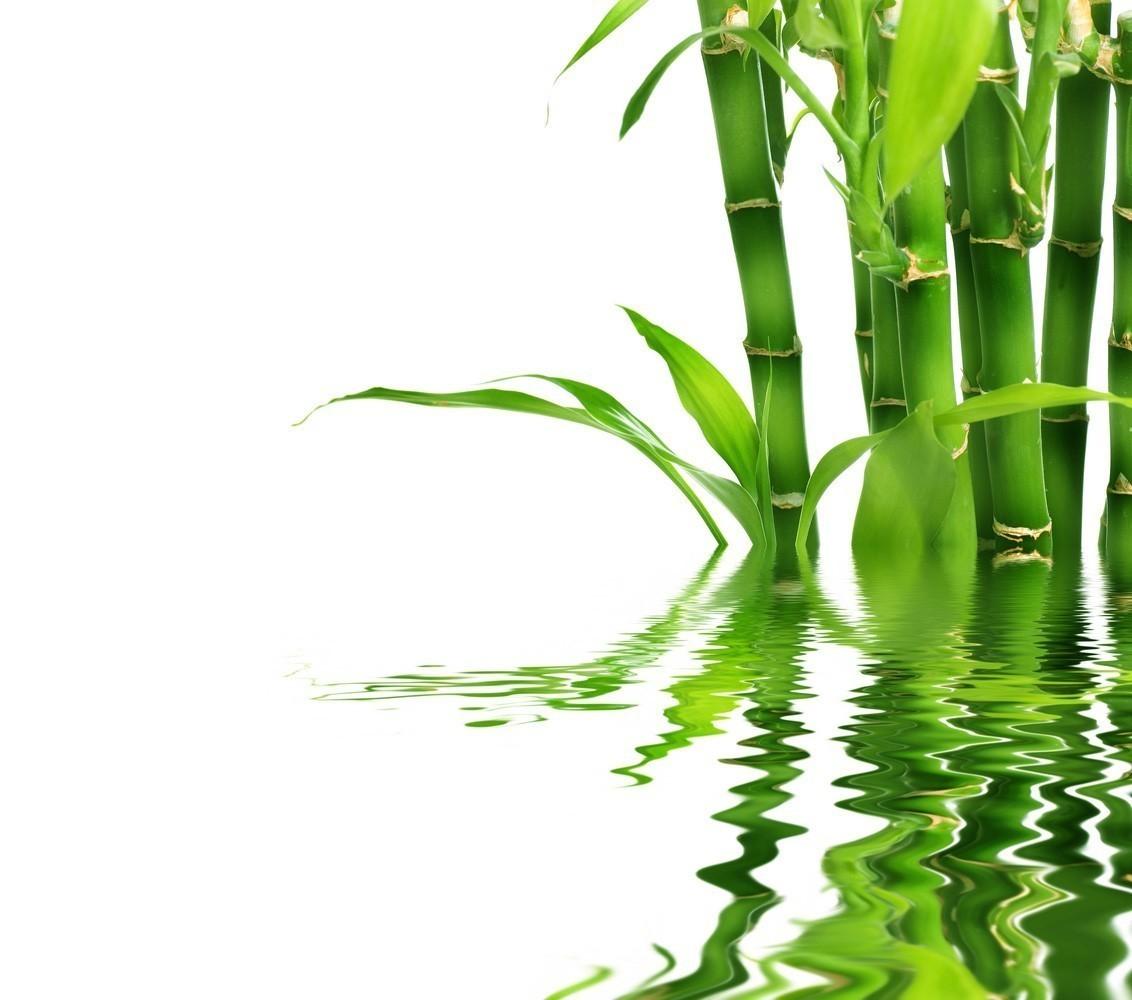 Бамбук в мифах и легендах разных народов