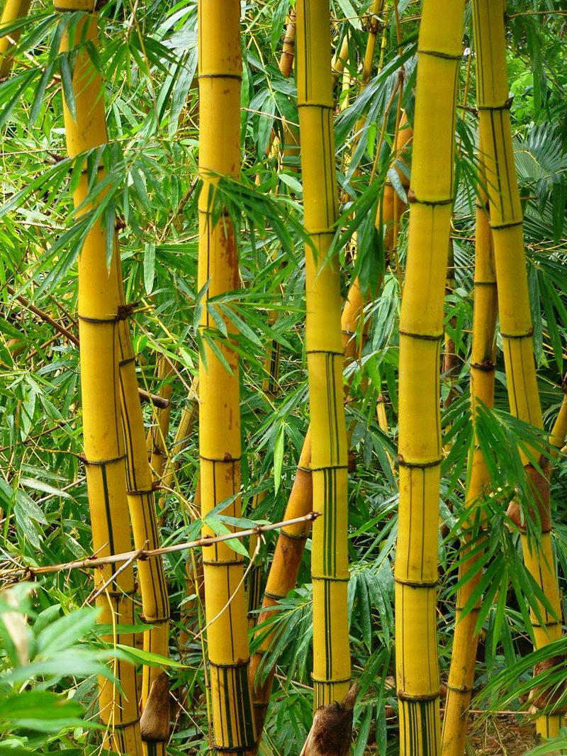 Интересно о бамбуке