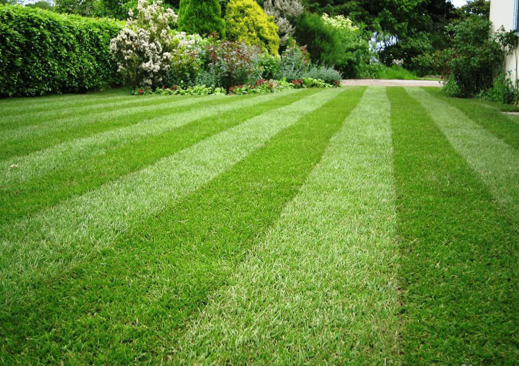 Современный газон